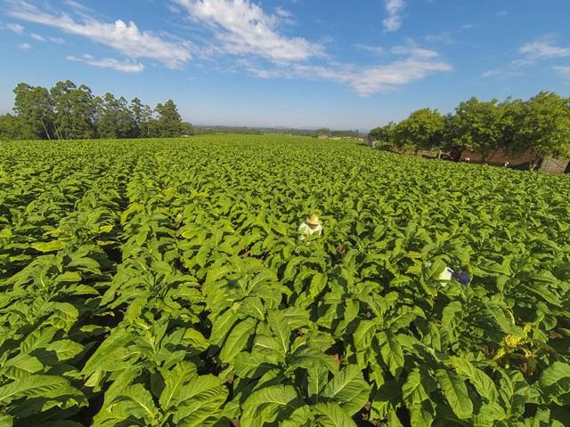 Rússia autoriza retomada das importações de tabaco do Brasil